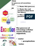 Excretory Sytem2013