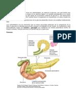 Guia Páncreas Endocrino