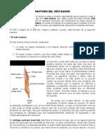 Anatomía Del Oído Equino.