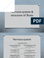 brain physiology.pdf