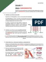 t9. Tj Muscular (2) Cardiaco