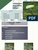 Intensitas Kerusakan Tanaman Cabai Oleh Bemisia Tabaci