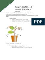 Cuidar Tus Plantas