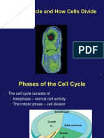 Lecture 5. Cell Cycle