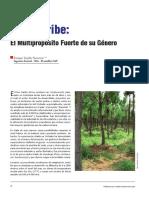 Forestal Pinus