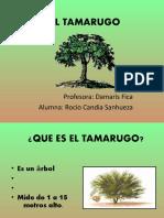 El Tamarugo