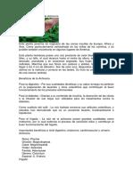 Usos Medicinales de la Achicoria.docx