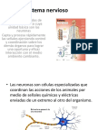 Sistema Nervioso Biofisica(1)