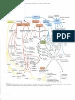 Embriología humana y biología del desarrollo