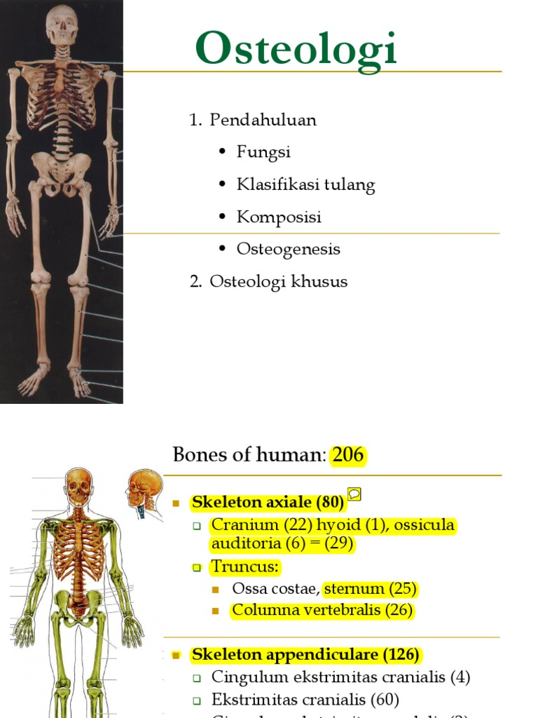 2. Axial Skeleton Edit   Vertebra   Skull
