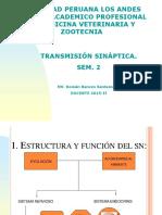 FISIOLOGIA-SEM-2 TRANSMISION SINAPTICA.ppt