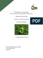Microbiologia de la verdolaga