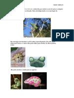 O Camaleão é um réptil vertebrado conhecido por mudar a sua cor para se adaptar a um ambiente ou a uma situação.docx