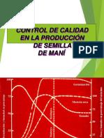 Produccion De Semilla De Mani