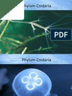 Cnidaria1