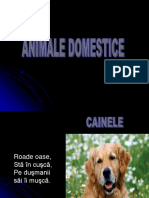 animale domestice ghicitori.ppt