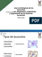 Morfologia leucocitos