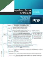AVC Equipo#4 Cuadro Nervios Raquideos Y Craneales