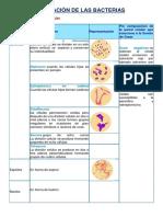 Clasificación de Las Bacterias Archivo Completo 2