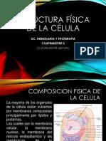 __presentacion Estructura Fisica de La Celula_e1