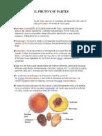 El Fruto y Su Partes
