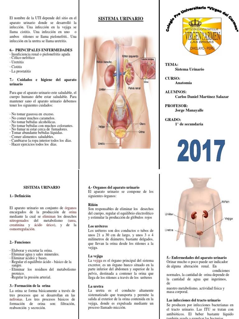 ejercicios para la definición de la función de prostatitis