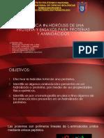 SEMINARIO 6 HIDROLISIS DE UNA PROTEINA