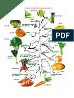 Frutas&Hortalizas&Verduras