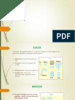 Bacilos y Cocos Formadores de Endosporas