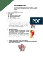informe-músculs (1)