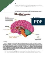 Info Cerebro 002