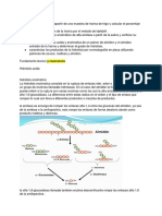Almidon (1)