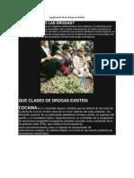 Legalizacion de Las Drogas en Bolivia