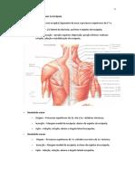 Apostila de ORIGEM E INSERÇÃO músculos