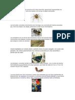 Animales Vertebrados Invertebrados Plantas Con Semilla y Sin