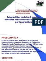 Adaptabilidad de Especies Forestales