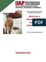 4. Nutrición y Alimentación de CSA