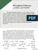 Pen to Se Phosphate Pathway Tut