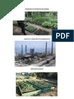 Programa de Reforestacion