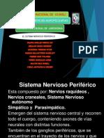 sistemanervioso-130327194626-phpapp01