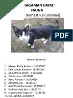 keanekaragaman hayati kucing