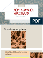 Streptomyces griseus