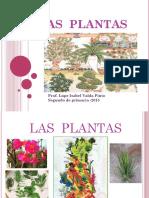 Las Plantas-lupe Valda