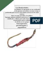 HEMI-URO-CEFALOCORDADOS.docx
