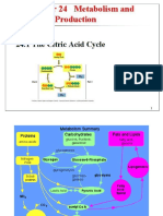 Rx 24 Citric Acid Cycle