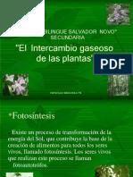 El Intercambio Gaseoso de Las Plantas