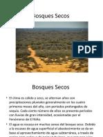 Clase Bosques Secos
