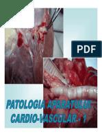 5 Cardio-Vascular 1