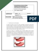 Previo Ulceras Pepticas Farmacologia Especial
