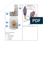 Laporan Anatomi Sistem Saraf